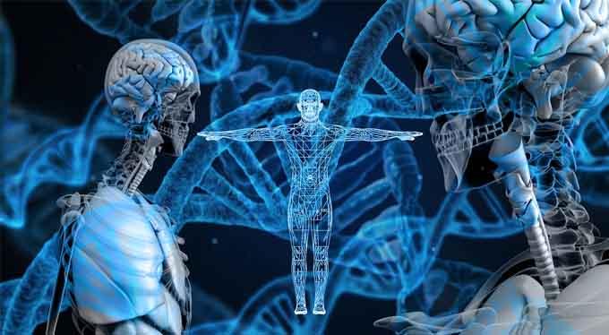 ADN y cuerpo