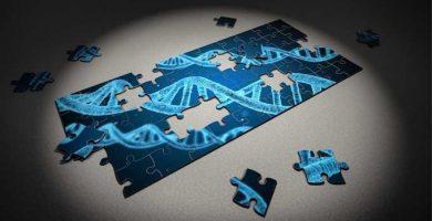 árbol genealógico Genética